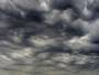 Asperatus 